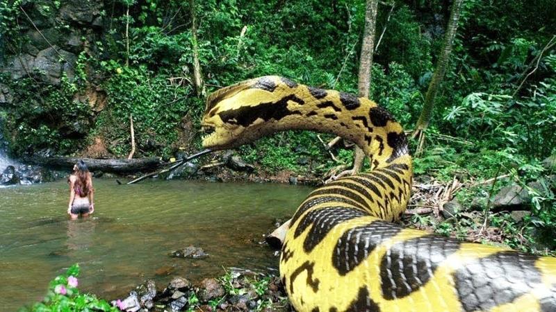 Самая Большая Змея Найденная в Реке Амазонка