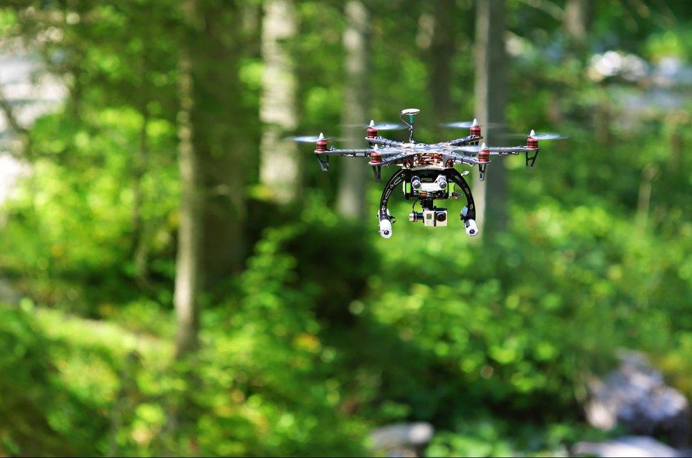 За сохранностью лесов будут наблюдать с воздуха