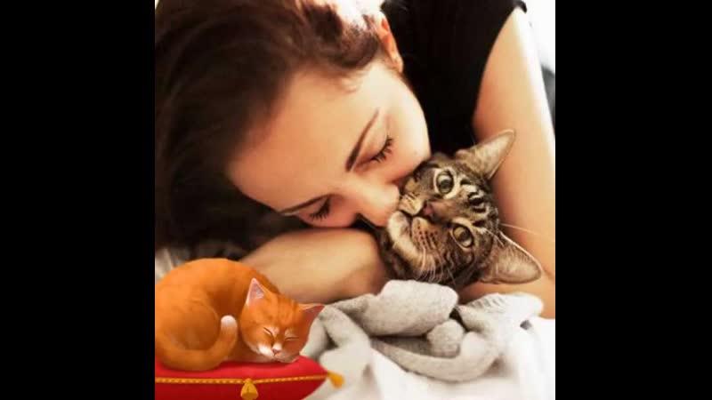 Мурчание кошек мне нравится больше чем пустые слова людей