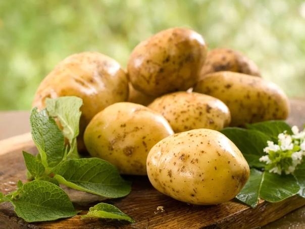 КАРТОФЕЛЬ ПОЛЕЗНЫЙ ПРОДУКТ Картофель это самый популярный овощ, доступный круглый год, без которого не обходится ни одна украинская семья. И это неспроста, ведь картофель очень полезен, он