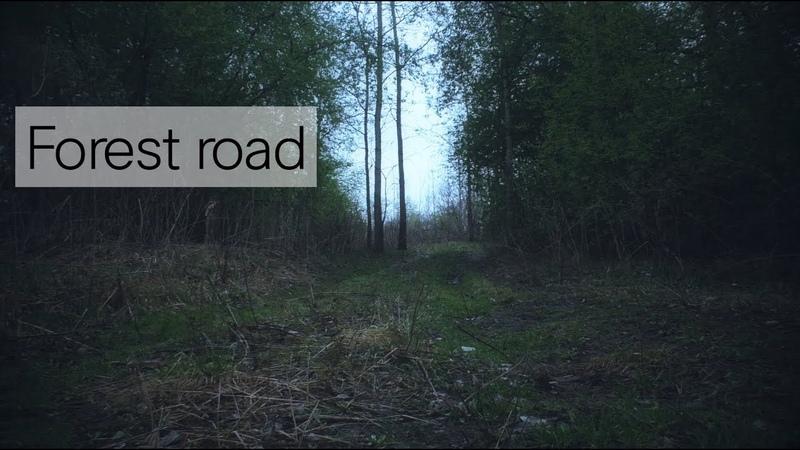 Forest road / Лесная дорога