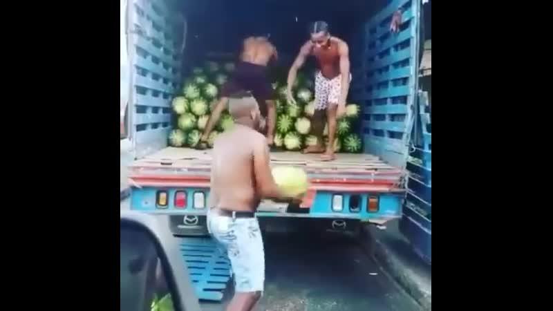 Как надо грузить арбузы