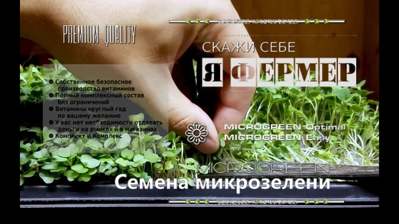Купить семена микрозелени в Украине 0965647296 0509299615 MICROGREEN© СеменаМикрозелениУкраина