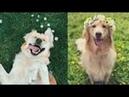 Симпатичные домашние животные Сборник видео милые животные из самых симпатичных животных 9