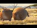 Мультики СМЕШИЛКИ веселая жизнь круглых диких и домашних животных