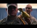 Дедовщина в американской армии.