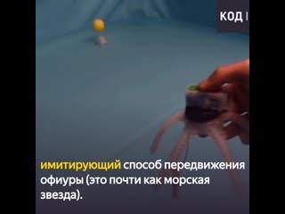 Знакомьтесь: Патрик, подводный робот-звезда
