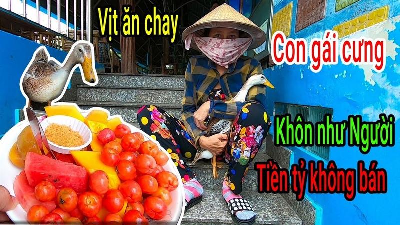 Gặp chú Vịt thông minh như người, trả 5 triệu không bán, theo Chủ đi bán trái cây dạo ở Sài Gòn