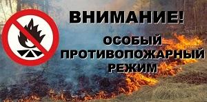В регионе запретили разжигать костры