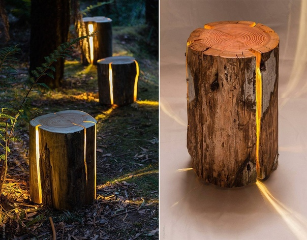 Не спешите пускать старые пни на дрова (источник: gofazenda)