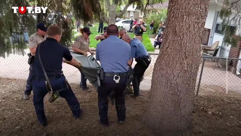 Боролся как мог. Медведя из США спасатели усыпили транквилизатором, но тот не хотел засыпать