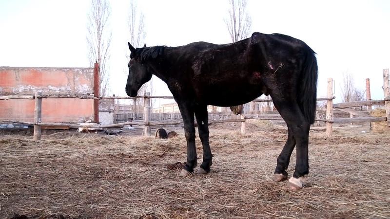 В Волгоградской области выхаживают доведенного до истощения жеребца