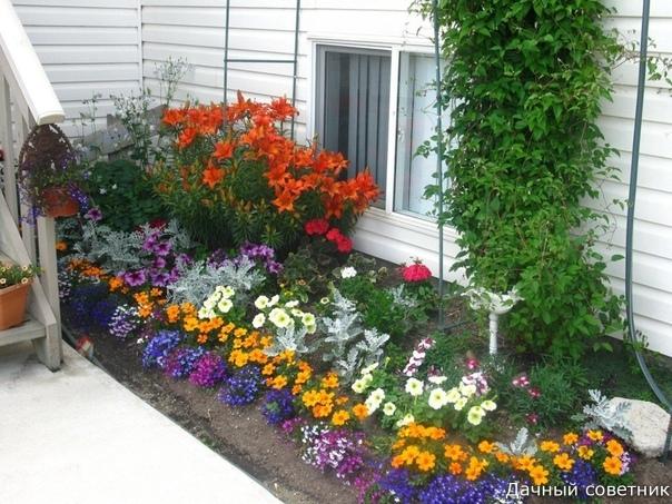 Многолетние цветы долгого цветения Какими растениями лучше украсить клумбы на даче, чтобы любоваться их цветением целое лето Для этого имеется довольно богатый и проверенный ассортимент,