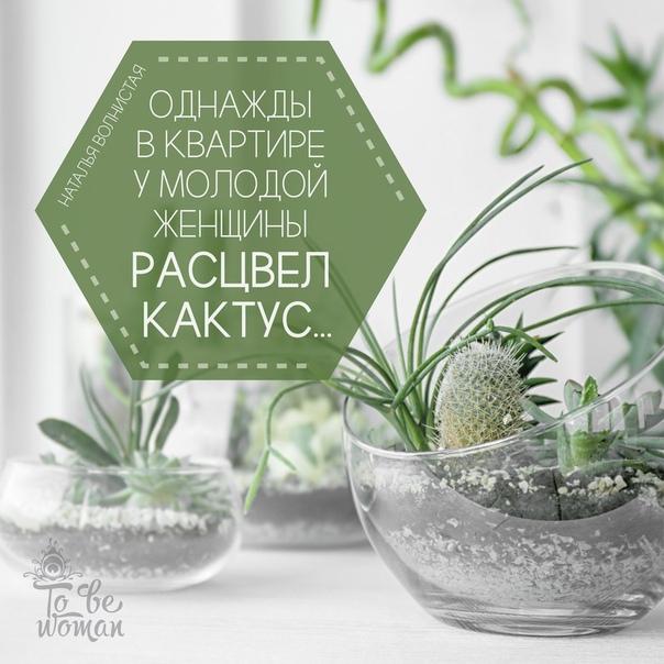 Однажды вквартире умолодой женщины расцвел кактус…