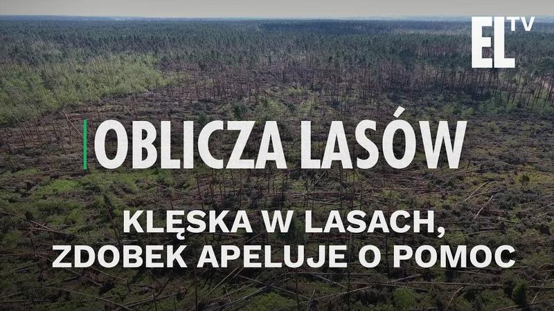 Klęska w lasach Zdobek apeluje o pomoc Zapowiedź Obliczy lasów 34