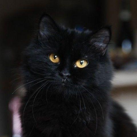 Черные котики - к счастью