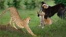 В Мире Животных Африки, Дикие Животные и Дикая Африка 2