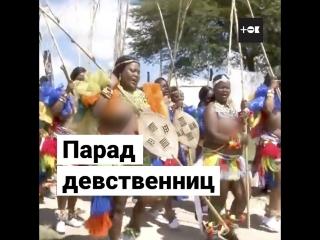 Праздник тростника: жены для короля Свазиленда