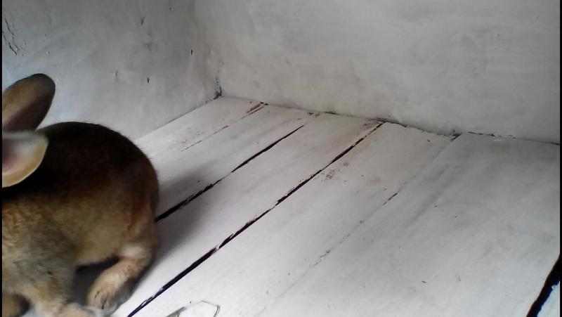 кролики бесоебят после переезда