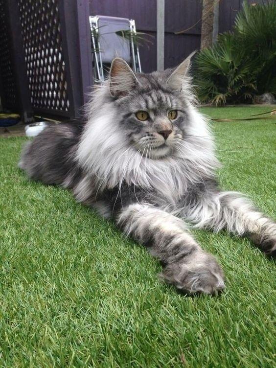 Красавец отдыхает на даче, как вам котик?