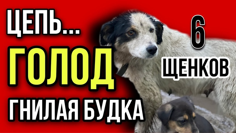 ОБРЕЧЁННЫЕ Страшная жизнь собаки Дины и 6 ти ее щенков