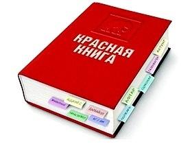 Петровские школьники стали победителями регионального марафона по русскому языку
