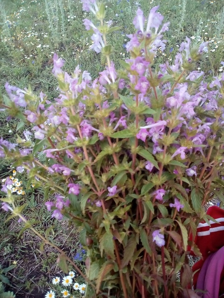 Кто знает, как называется это растение