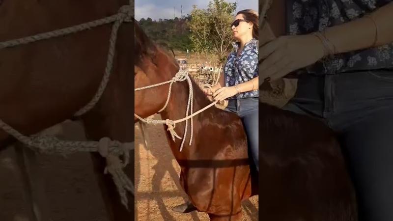 Riding my dear horse 🐎🍷🌻 ponyboy