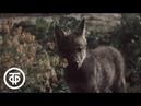 В объективе - животные. Волчата 1984