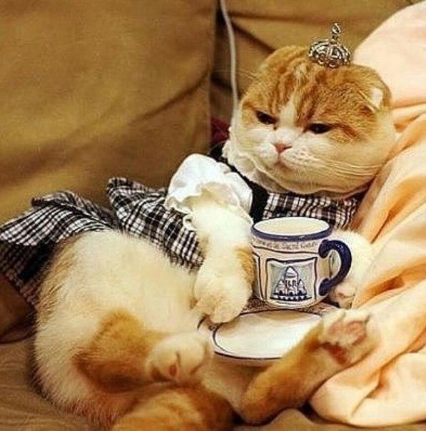 Картинки с добрым утром с котами веселые