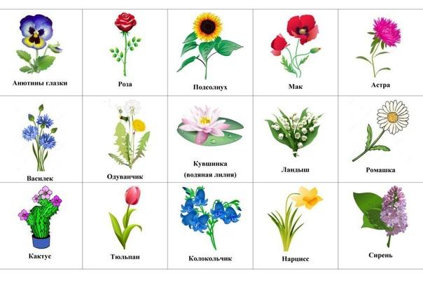 Загадки про цветы Перед тем как разгадывать загадки о цветах, вы можете познакомить ребенка с различными цветами с помощью карточки. На картинке изображены все цветы, для которых размещены