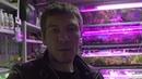 Выходной аквариумиста На птичку за растениями Открытие зоомагазина Биобокс