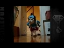 Смешные коты и кошки ДО СЛЁЗ Приколы с Котами 2017 Видео про котов_low.mp4
