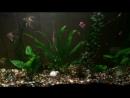Аквариум набирает красоту рыбки и растения подросли стало более симпатично 💪🏿💪🏿💪🏿💪🏿