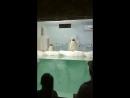 пингвины в Сочи