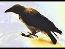 Как я стала мамой воронёнка Мухи Потеха учимся вместе летать Кушать подано Вся семья на ушах