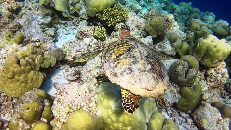 Discover Scuba Diving in Maldives, Baa Atoll
