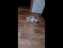 издевался над котом