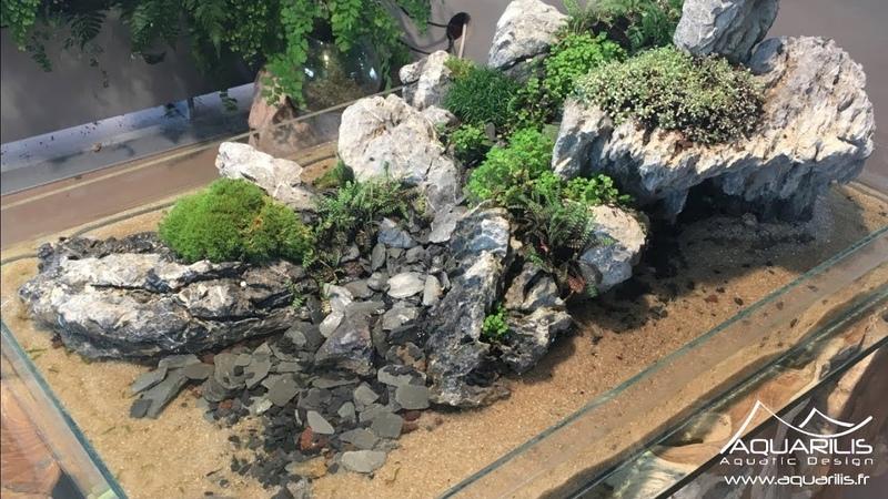 LIle - Un mélange de paludarium, daquascaping et de paysagisme végétal