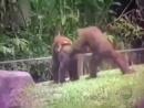 29 обезьян за 38 секунд