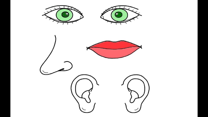 Eyes Mouth Nose Ear Body Parts Coloring Pages for Child Drawing and Colouring