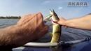 Рыбалка на реке Лиелупе. Ловим щуку на воблеры и силикон.