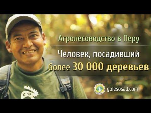 Агролесоводство в Перу. Человек, посадивший 30 000 деревьев.