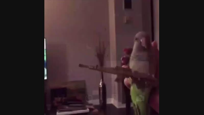 Воин попугайского полка