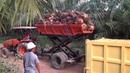 Angkutan TBS sawit dengan menggunakan scissor Lift Trailer