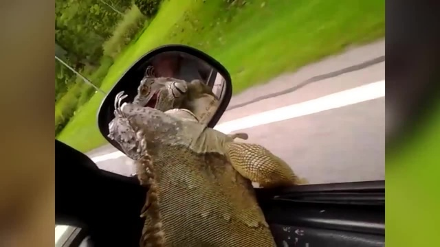 Funniest Lizard Reptile Blooper Reaction Videos of 2016 Weekly Compilation | Funny Pet Videos