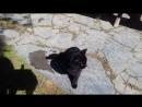 слюнявые котейки Памуккале