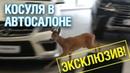 Олененок Бэмби устроил погром в автосалоне ТЦ «Кунцево» - Подмосковье 2018 г.