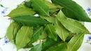 Этот лист - хорошее средство от высокого давления, сахара в крови и лишнего веса!