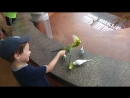 08 10 18 parakeet feeding